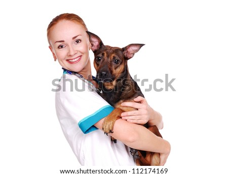 Veterinarian doctor holding the  dog on hands - stock photo