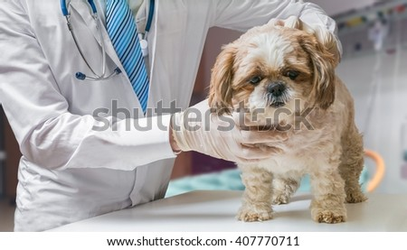 Veterinarian doctor is examining dog in veterinary.