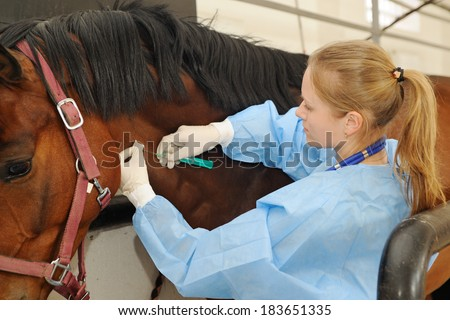 Veterinarian doctor with horse - intravenous injections