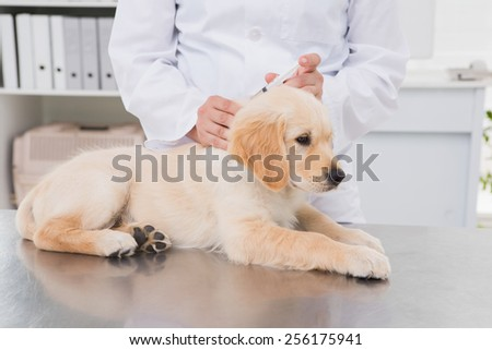 Veterinarian doing injection at a cute dog in medical office