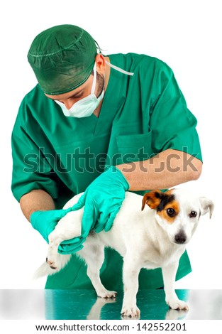 Veterinarian examines the dog's hip on white background - stock photo