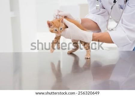 Veterinarian examining a cat in medical office - stock photo
