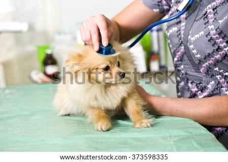 Veterinarian examining a cute dog  - stock photo