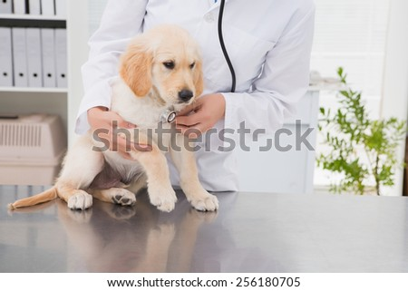 Veterinarian examining a cute dog with a stethoscope in medical office - stock photo