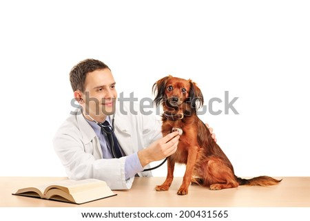 Veterinarian examining a dog with stethoscope isolated on white background - stock photo