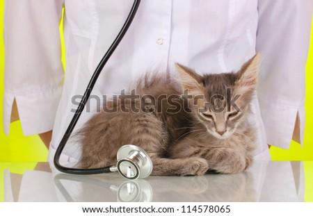 Veterinarian examining a kitten on green background - stock photo