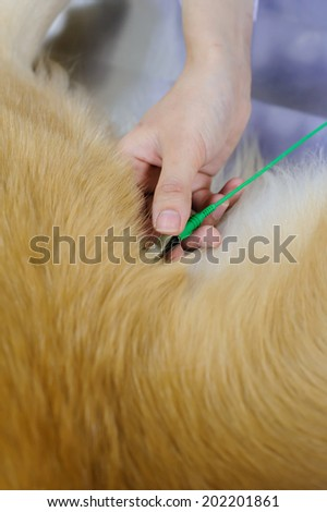 veterinarian examining cute golden retriever at hospital - stock photo
