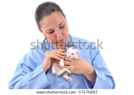 Veterinarian examining cute white kitten with a stethoscope.