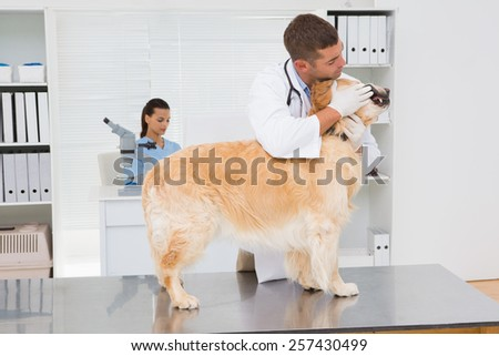 Veterinarian examining teeth of a cute dog in medical office