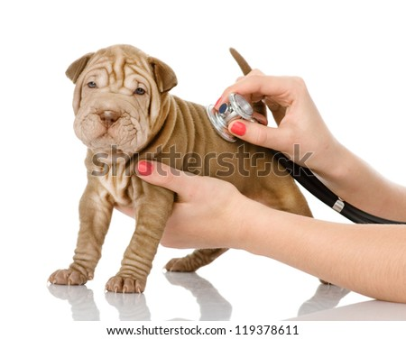 Veterinarian hand examining a sharpei puppy dog. isolated on white background - stock photo