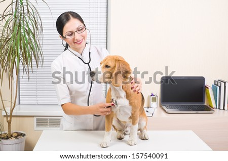 Veterinarian listens to a stethoscope  dog of breed of beagle - stock photo