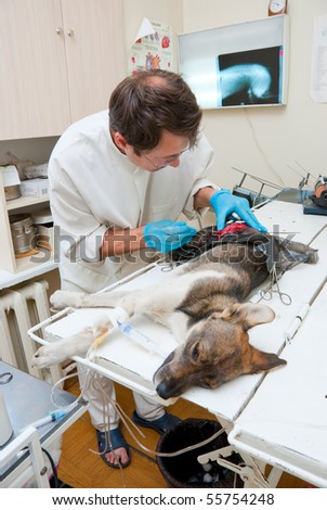 Veterinarian makes surgery the dog with fracture back paws - stock photo