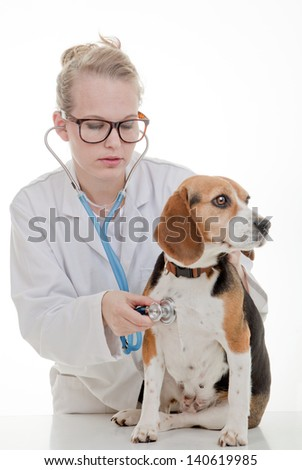 veterinarian or vet examining pet dog - stock photo