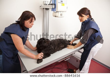 veterinarian preparing dog for x-ray examination - stock photo