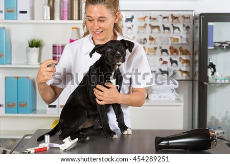 Veterinarian putting your dog colony american staffordshire