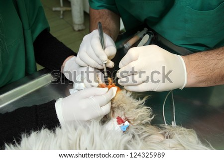 Veterinarian surgery, fixing of wounded dog leg - stock photo