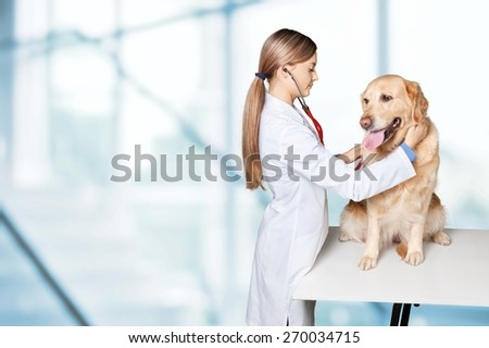 Veterinarian, vet, dog.