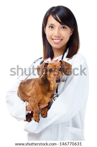 Veterinarian with dachshund dog - stock photo