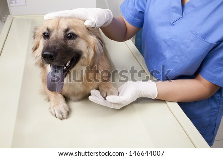 Veterinarian with dog in examination room