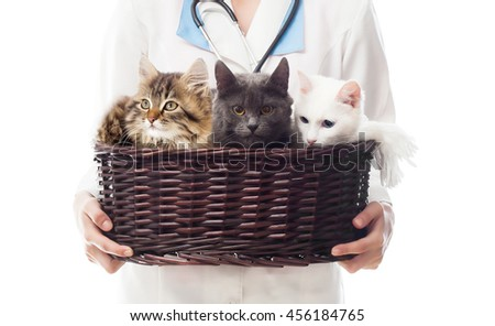 veterinarian woman holding a basket of cats - stock photo