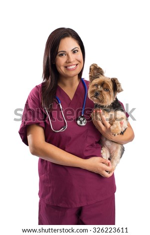 Veterinarian woman holding a Yorkshire Terrier dog - isolated on white - stock photo