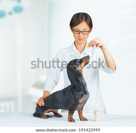 Veterinarian woman holds medication for dachshund dog in hospital - stock photo