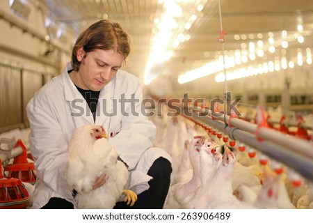 Veterinarian working in chicken farm - stock photo