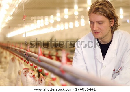 Veterinarian working on chicken farm - stock photo