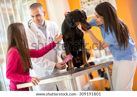 Veterinarians bandaging leg of injured Great Done dog and comforting him in vet infirmary - stock photo