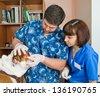 veterinarians inspects bulldog in veterinary station - stock photo