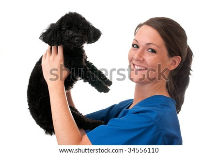 Veterinary assistant holding pet poodle isolated on white background. - stock photo