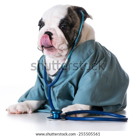 veterinary care - bulldog dressed up like a vet on white background - stock photo