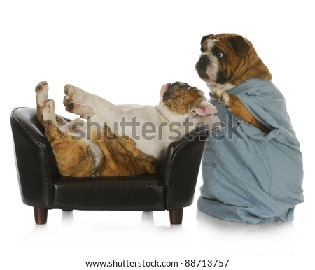 veterinary care - english bulldog doctor tending to sick bulldog laying on leather couch with reflection on white background - stock photo