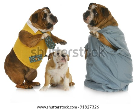 veterinary care - english bulldog parent talking to veterinarian with baby bulldog looking on