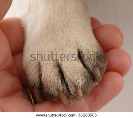 veterinary care - persons hand holding dog paw - stock photo