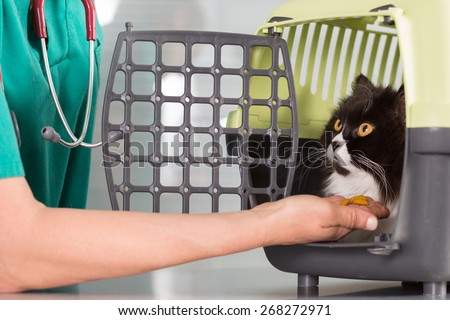 Veterinary clinic taking a Persian cat of your transporter - stock photo