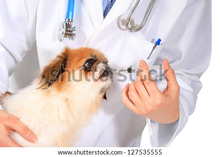 Veterinary concept. Dog and vet isolated over white.