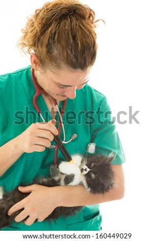 Veterinary conducting a review to a kitten - stock photo
