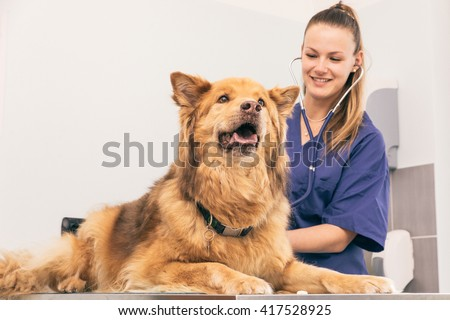 Veterinary doctor checking dog heart with medical tool - stock photo