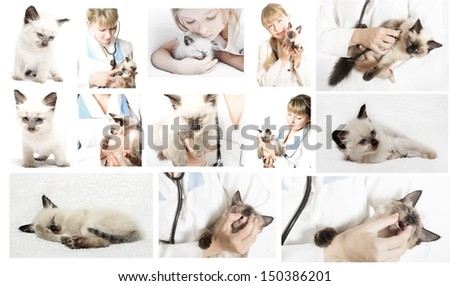 Veterinary doctor in veterinary subjects - stock photo