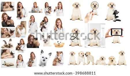 Veterinary doctor in veterinary subjects - stock photo