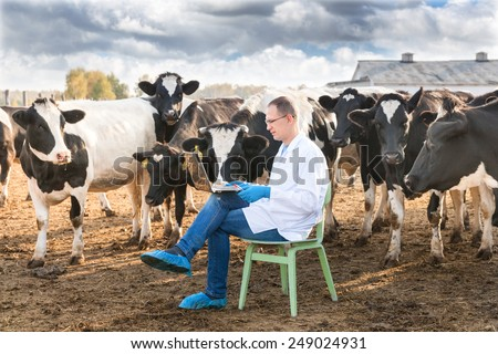 Veterinary Doctor working on a laptop  on farm cows - stock photo