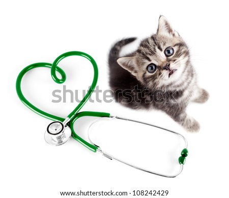 Veterinary for pets concept - stock photo