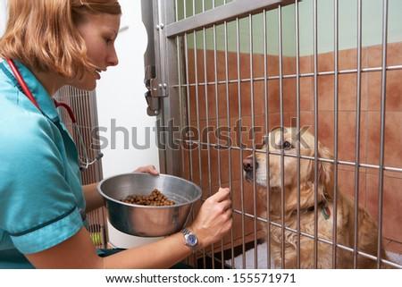 Veterinary Nurse Feeding Dog In Cage - stock photo