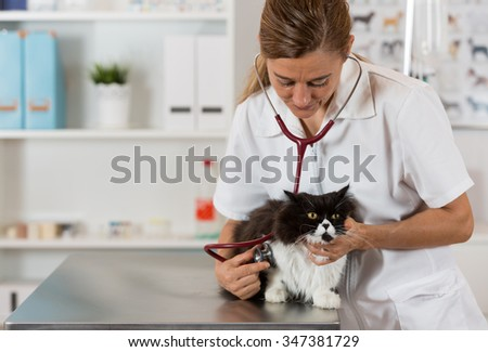 Veterinary performing auscultation a sick kitten in the clinic