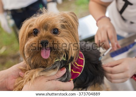 veterinary surgeon is giving the vaccine to cute dog sick receive injection in animal hospital. - stock photo