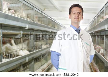 veterinary surgeon on eggs and chicken factory farm - stock photo