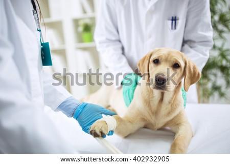 Veterinary Surgeon Treating Dog In Surgery, healthcare - stock photo
