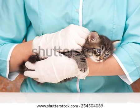 Veterinary survey of cute frightened kitten close-up - stock photo