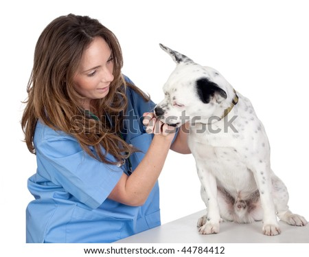 Veterinary with a dog for a review isolated on white background